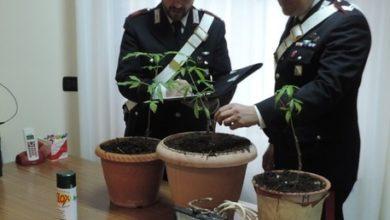 Photo of Droga: piantagione in 2 case disabitate