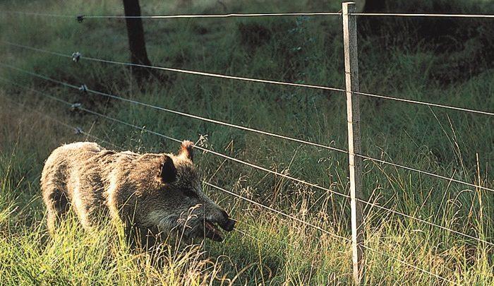 Recinzione Per Cinghiali.Psr Fino Al 15 2 Bando Recinzioni Contro Danni Fauna