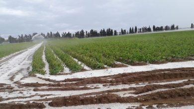 Photo of Maltempo Metaponto: Danni ad aziende agricole ed al Metapontum Village