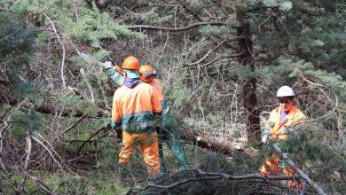 Photo of Forestazione i sindacati chiedono incontro con il presidente Bardi
