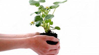 Photo of Nasce il programma SEAM, dedicato alla sostenibilità dell'industria degli abrasivi
