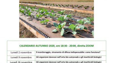 Photo of IMPARARE A FARE L' ORTO BIOLOGICO,  IL CORSO SULLA PIATTAFORMA ZOOM