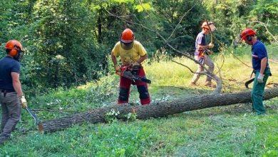 Photo of Criticità lavoratori forestali, USB Basilicata annuncia manifestazione